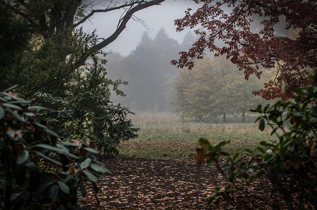 Autumn Landscape Nature Trees Fog