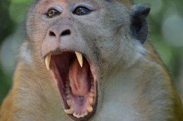 Monkey Face Teeth Primate green planet Cute