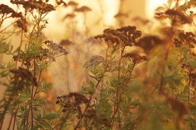 Morning Mist Fog Cobweb Landscape indian summer