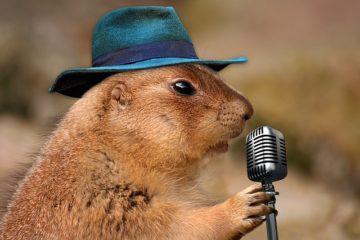 Prairie Dog Singing Musical Rodent