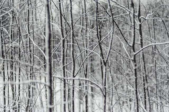 Tree Branch Plant Nature Snow